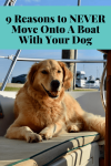 9 Reasons to NEVER Move Onto A Boat With Your Dog - (golden retriever in cockpit)