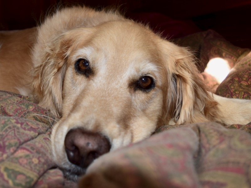 Look at your boat through your dog's eyes (and nose and feet). It will give you information you need to help him love it as much as you do.