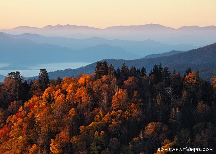 Shenandoah Valley Skyline Drive Fall Foliage Experience