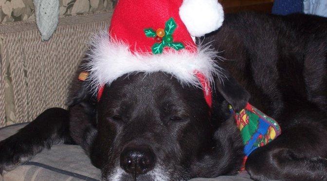 Buddy gets festive