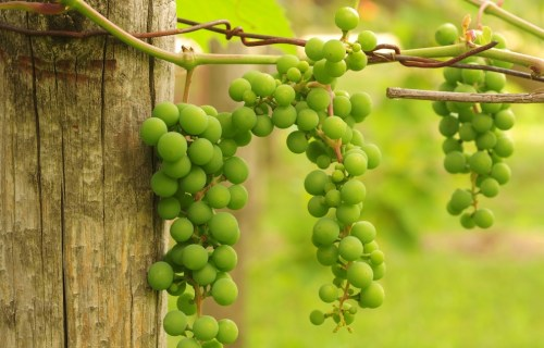 What is Chablis Wine? | Adam Chase | SommelierQA.com
