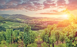 Background on Red Burgundy Wines and Burgundy Wine Region | Sarah Trubnick, Sommelier Barrel Room San Francisco | SommelierQA.com