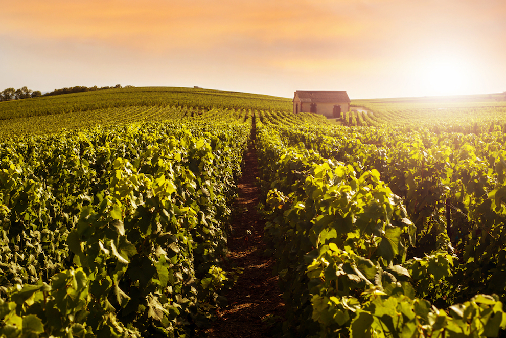 What is a Grower Champagne?