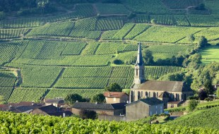 The Best Pinot Noir Food Pairings | Pinot Noir Vines at Vergisson Vineyards Burgundy, France