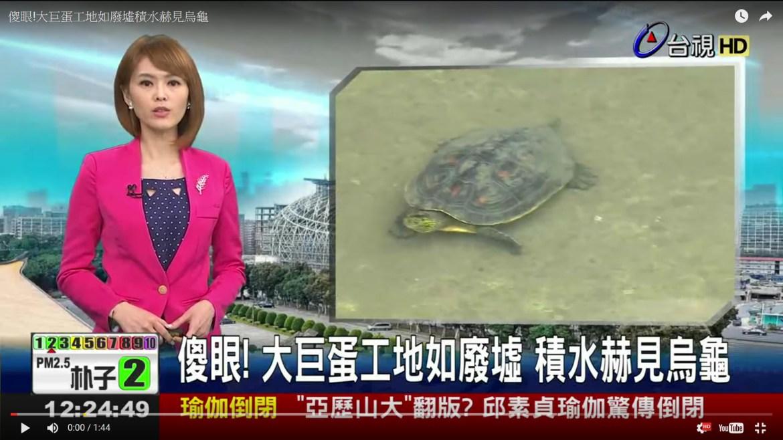 大巨蛋爭議會勘-大巨蛋工地如廢墟積水赫見烏龜