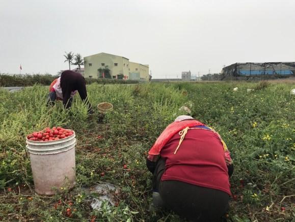 企業公益活動 - 送您無毒當季蔬果