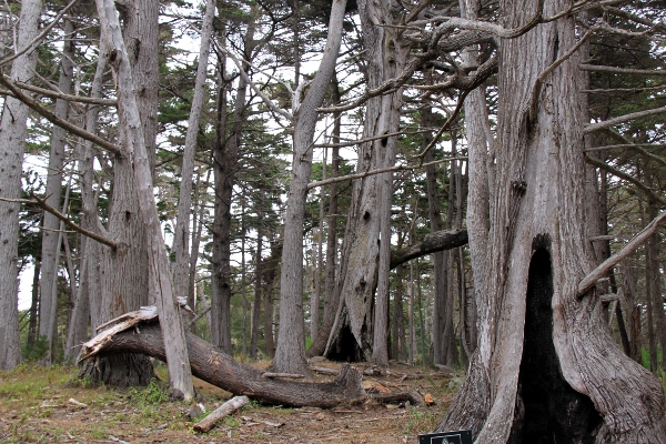 SÃ¥ kom jag in i den mystiska skogen