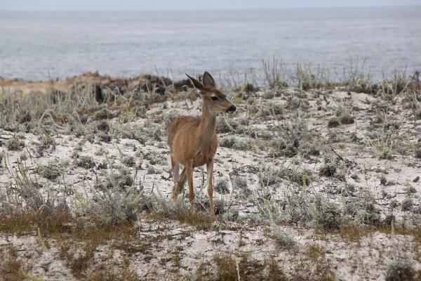 Plötsligt stötte jag på Bambi vid vägkanten (och två av hennes vänner)