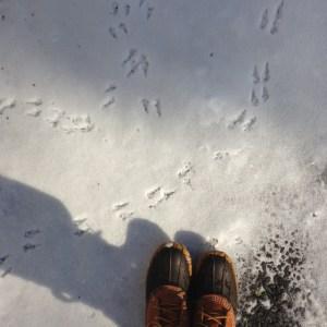 snowy-bird-footprints.jpg