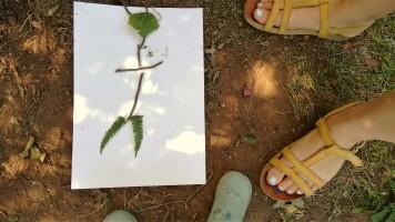 ALT=image of leaf picture