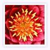 Horóscopo da flor Flor-de-Lotus (de 3/2 a 1/3)
