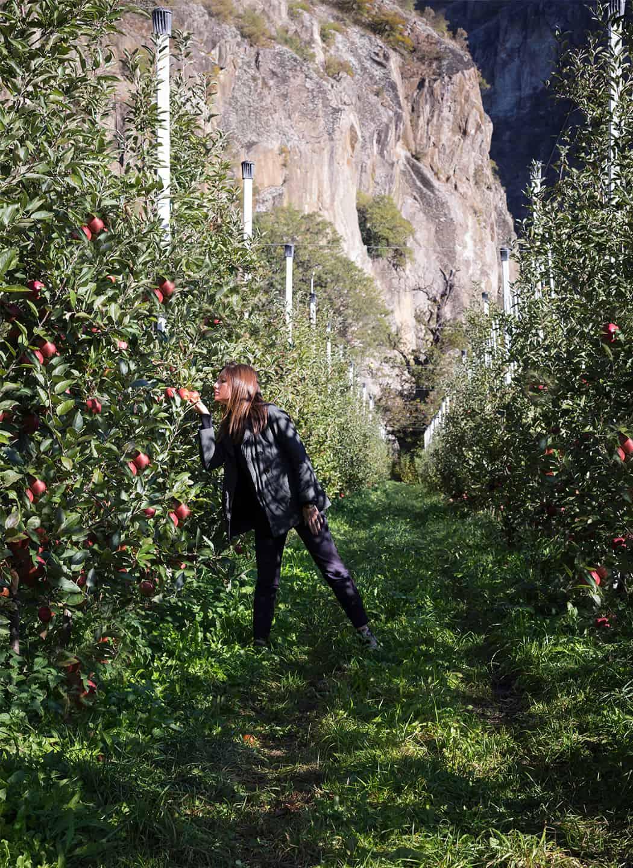 le mele della Val Venosta