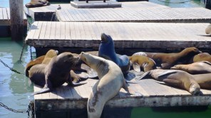 Action bei den Seelöwen