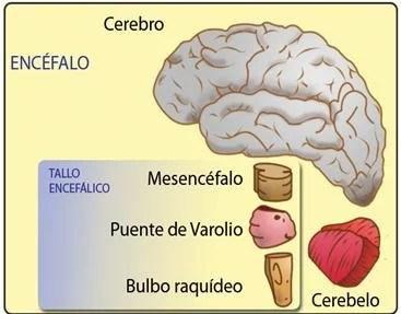 cerebro-reptil