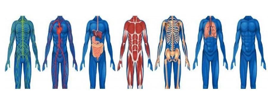¿Qué es nuestra Fisiología?