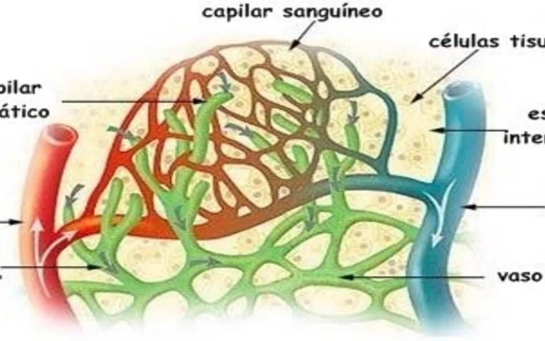 Linfa: sistema linfático