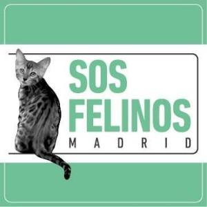 SOS Felinos Madrid