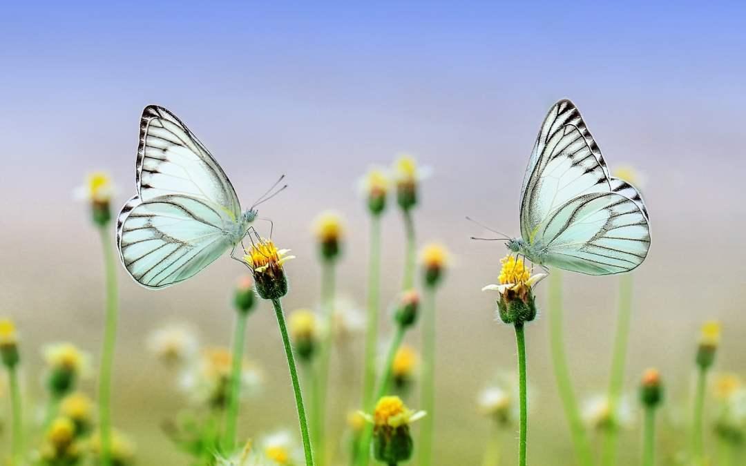 Efecto Mariposa ¡Atrévete!