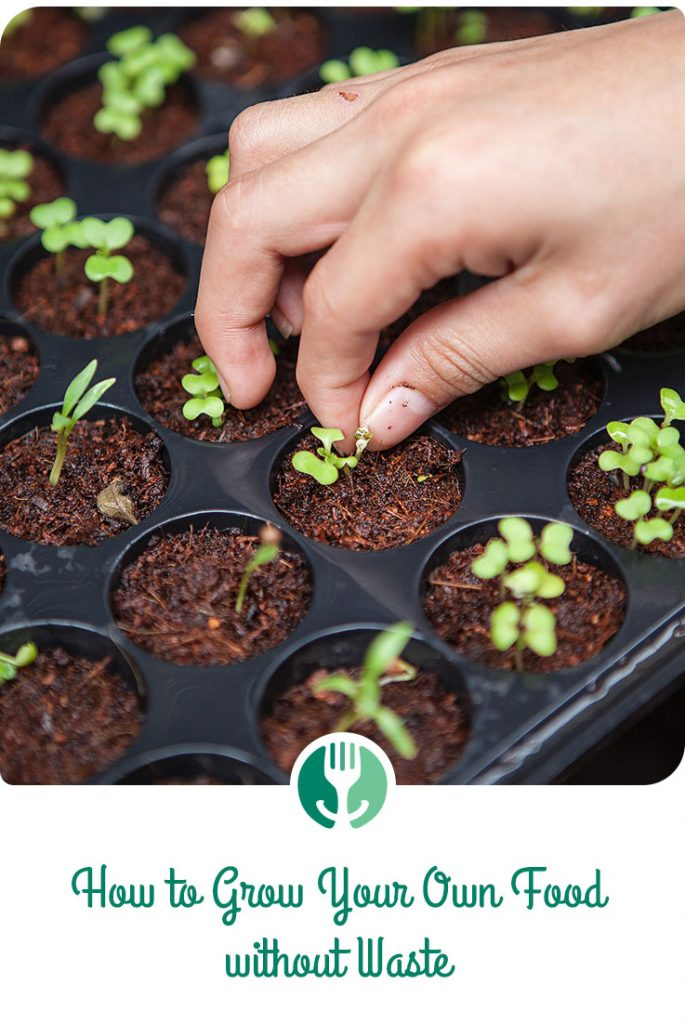 Close up of hand planting sprouts (with title overlay)