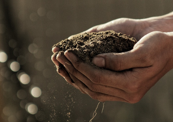 Hands holing a pile of dirt