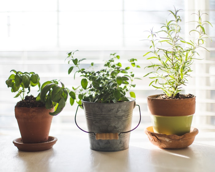 Variety of containers for an indoor herb garden