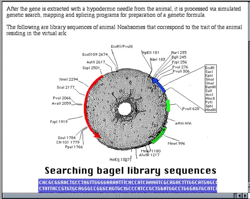 Sonya Rapoport, The Transgenic Bagel