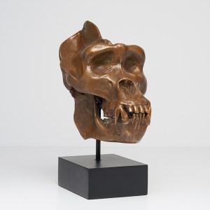 Western Lowland Gorilla in Light Bronze