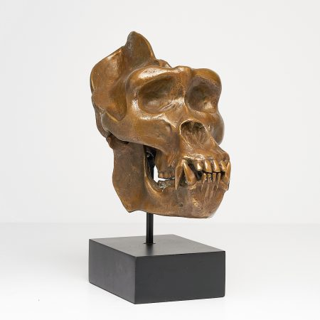 Western Lowland Gorilla in Light Bronze