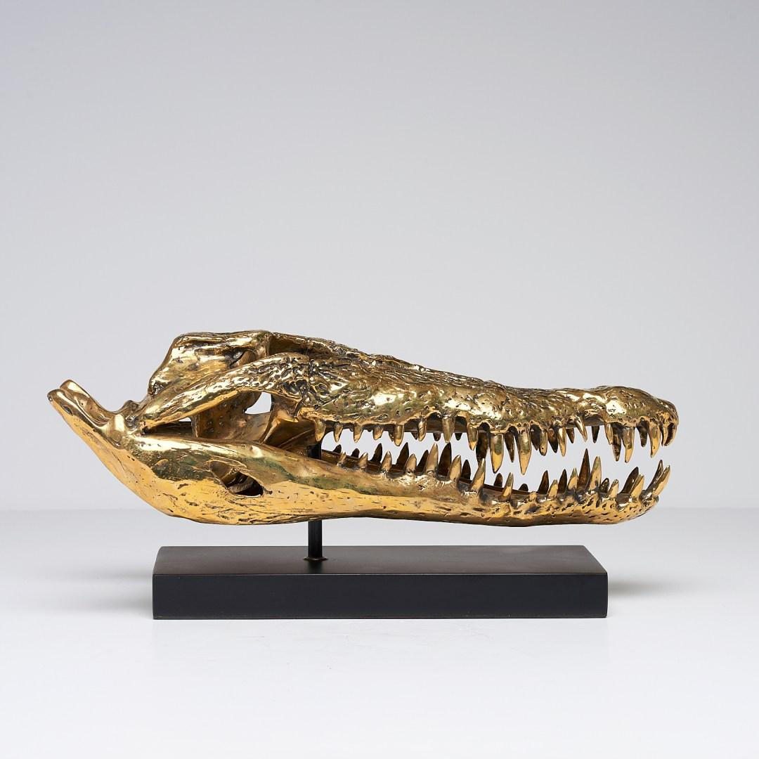 large 42cm saltwater crocodile skull