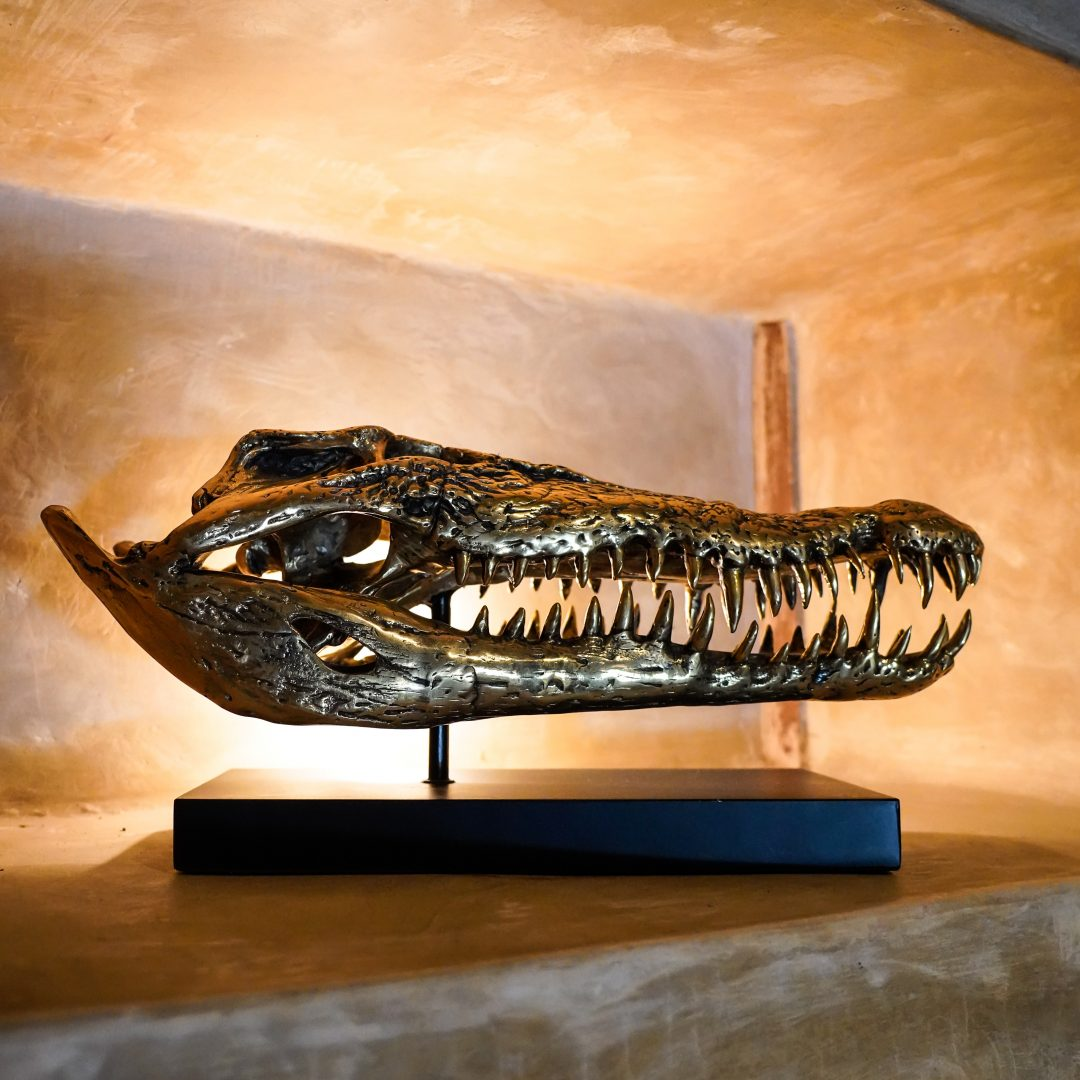 Saltwater Crocodile Skull Sooka Interior