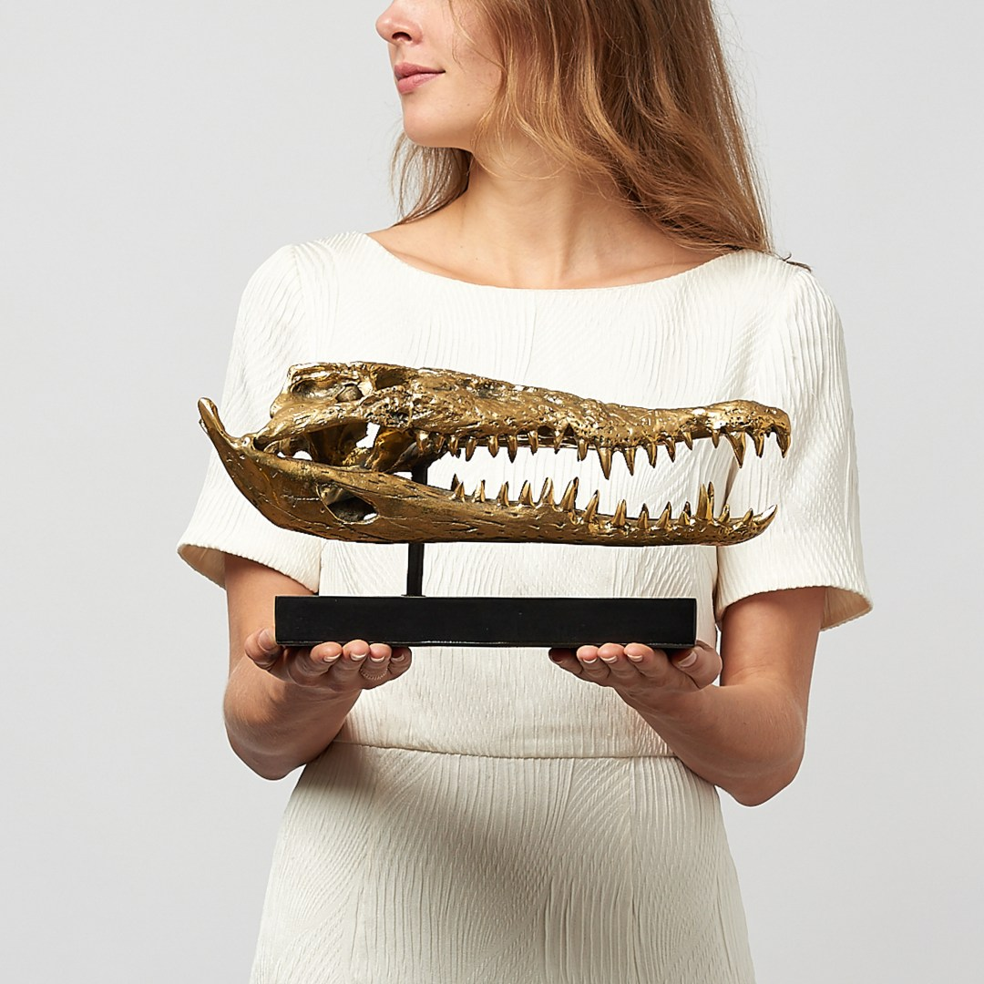 Medium Saltwater Crocodile Skull in polished bronze