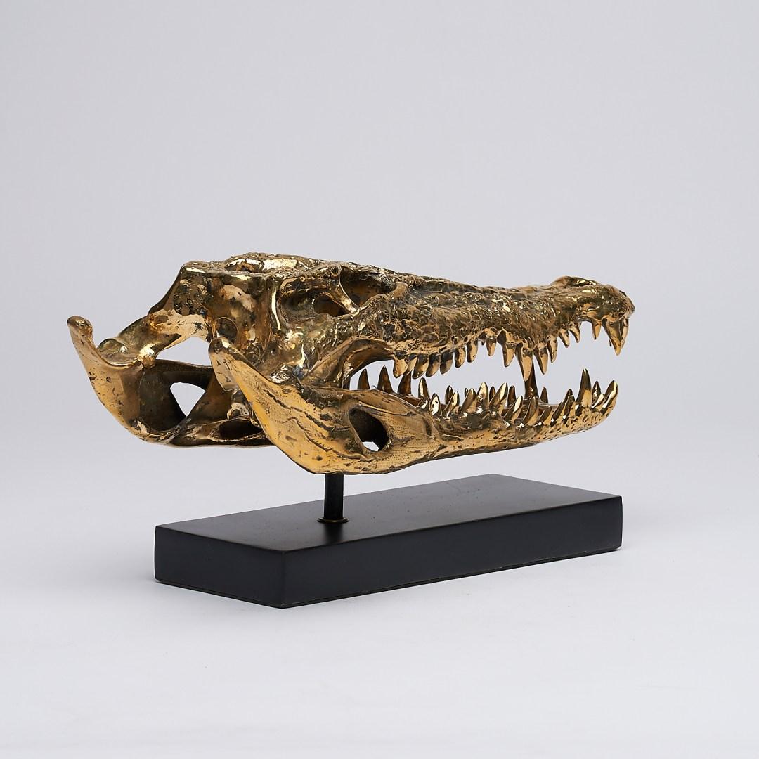 Saltwater Crocodile Skull 2.0