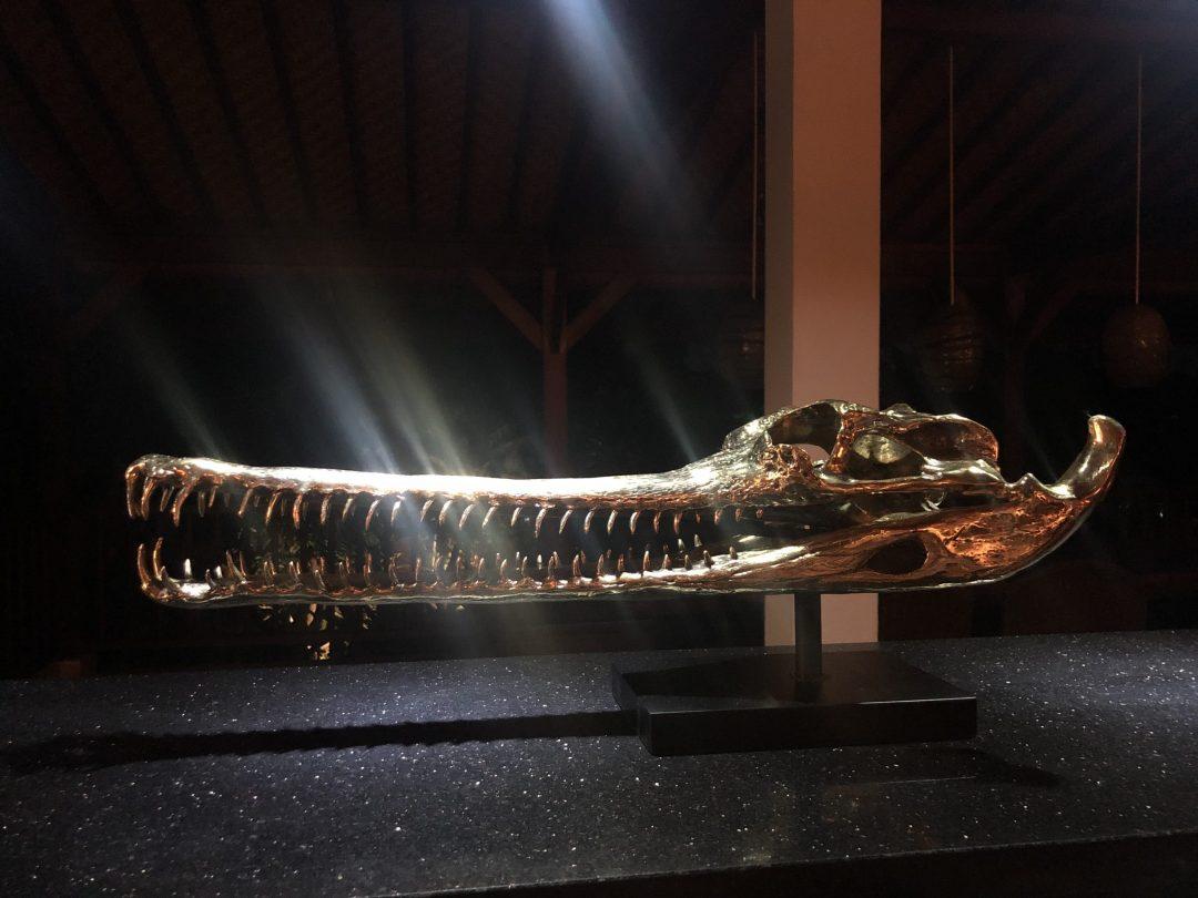 Gharial Crocodile Skull