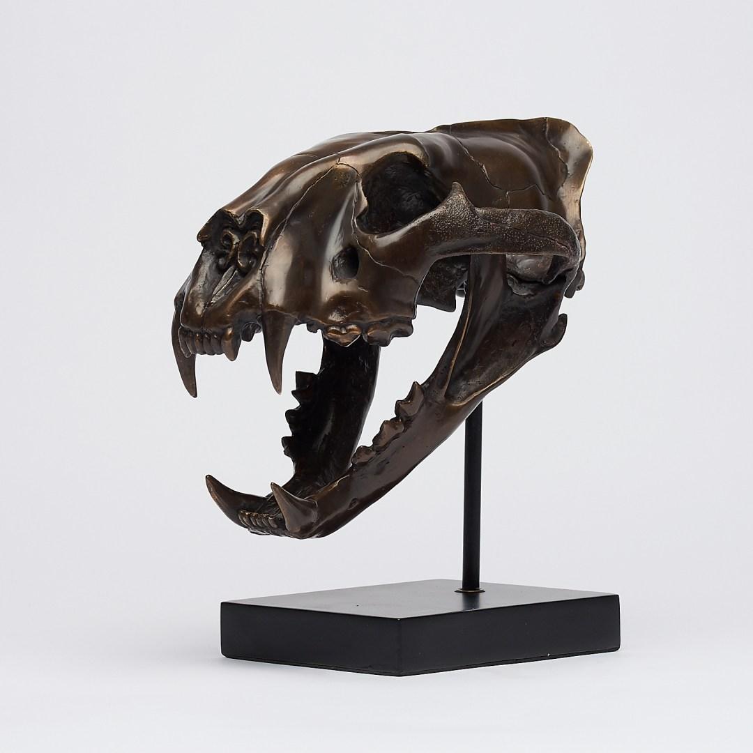 bronze sumatran tiger skull
