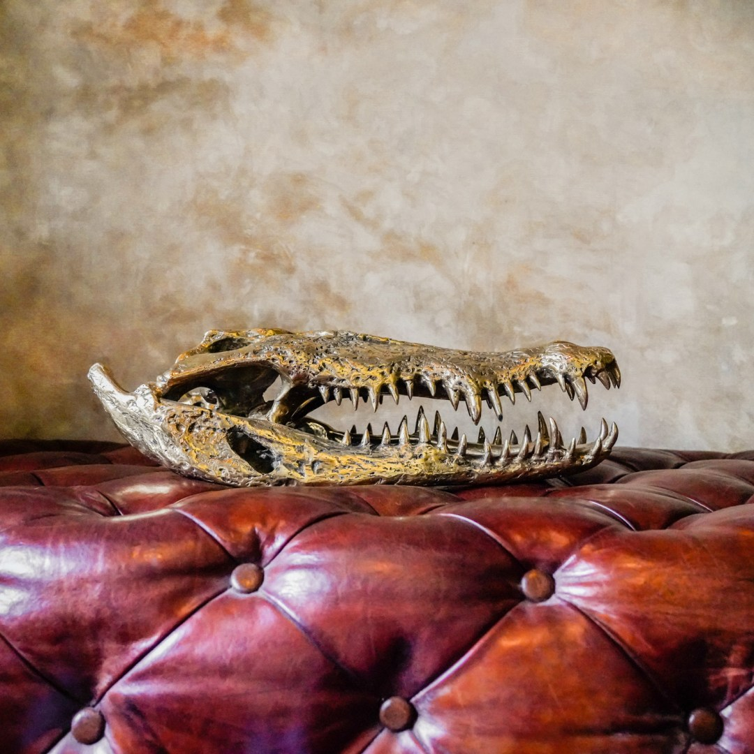 extra large saltwater crocodile skull in polished bronze