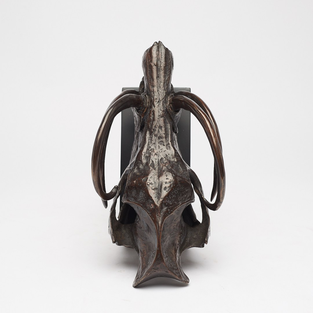babirusa skull in bronze