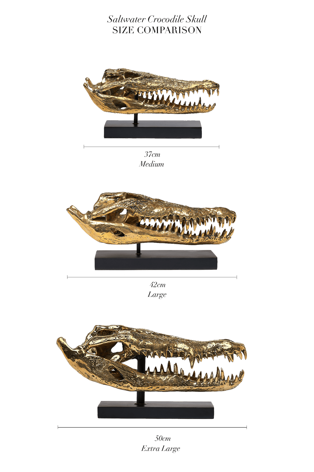 saltwater crocodile skull comparison