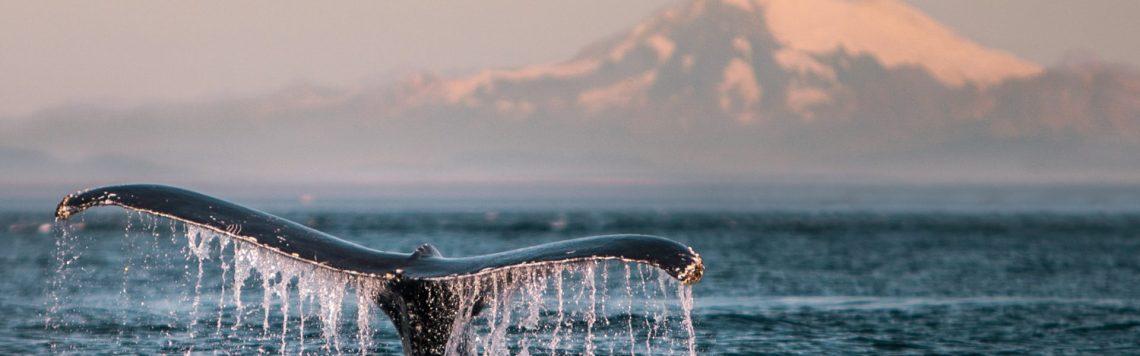 humpbackbaker-1920x600