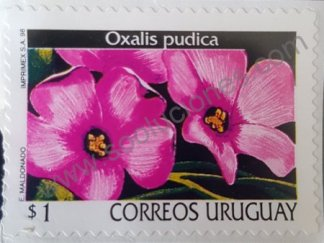 Sello de Uruguay 1998 flor Oxalis pudica valor 1 $ – Peso Uruguayo