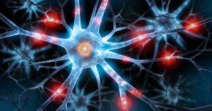 Estudo diz que mulheres têm em média menos 4 mil milhões de neurónios que os homens