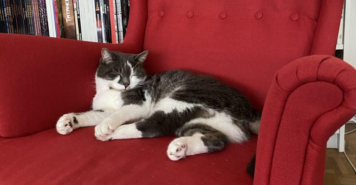 Chat qui dort dans le fauteuil