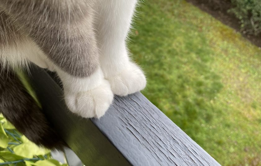 Pattes de chat sur la rambarde du balcon
