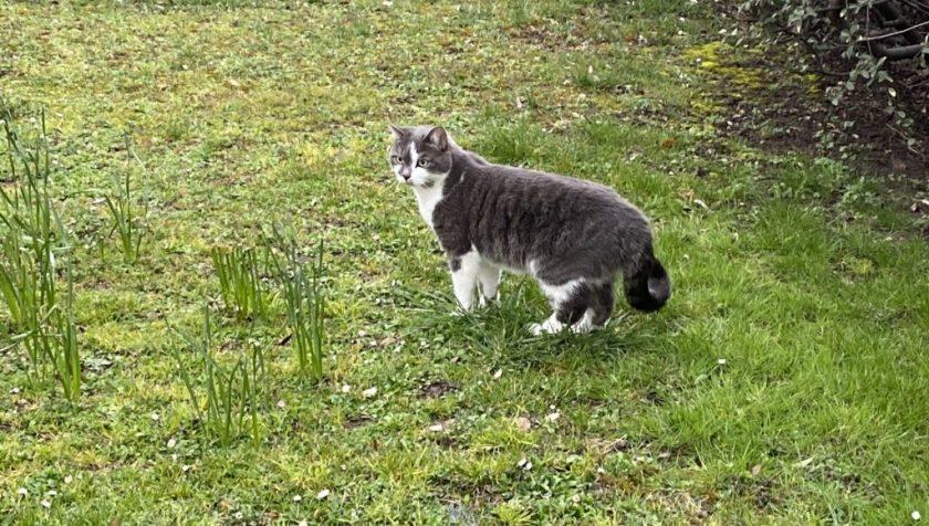 Pixel en train de se dégourdir les pattes dans le jardin