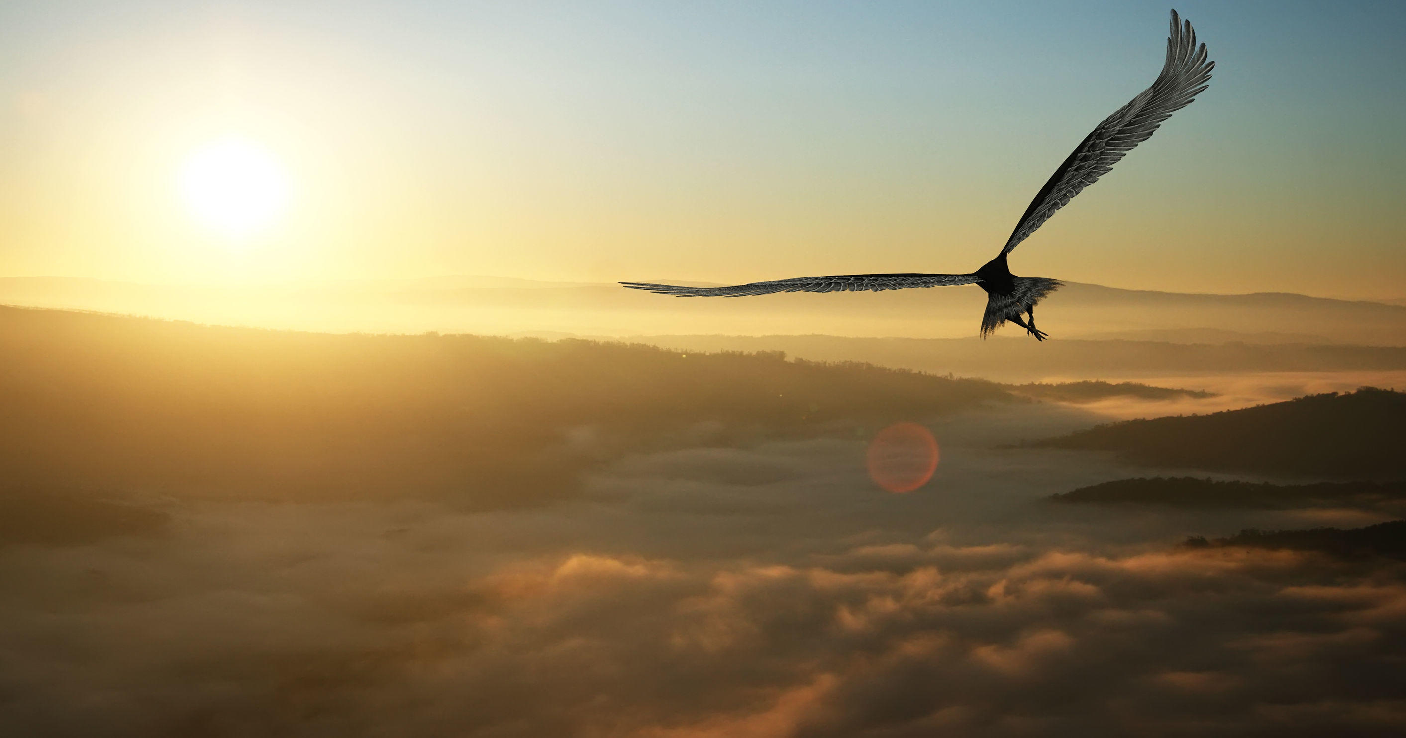 32093134 – eagle flying in the clouds at dawn