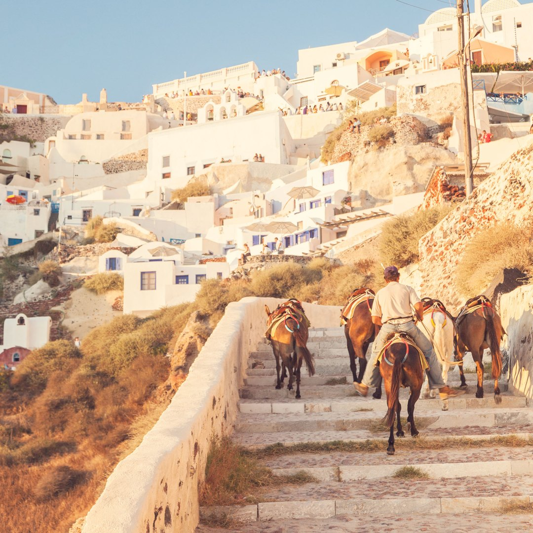 Donkeys carrying people up the steep hill