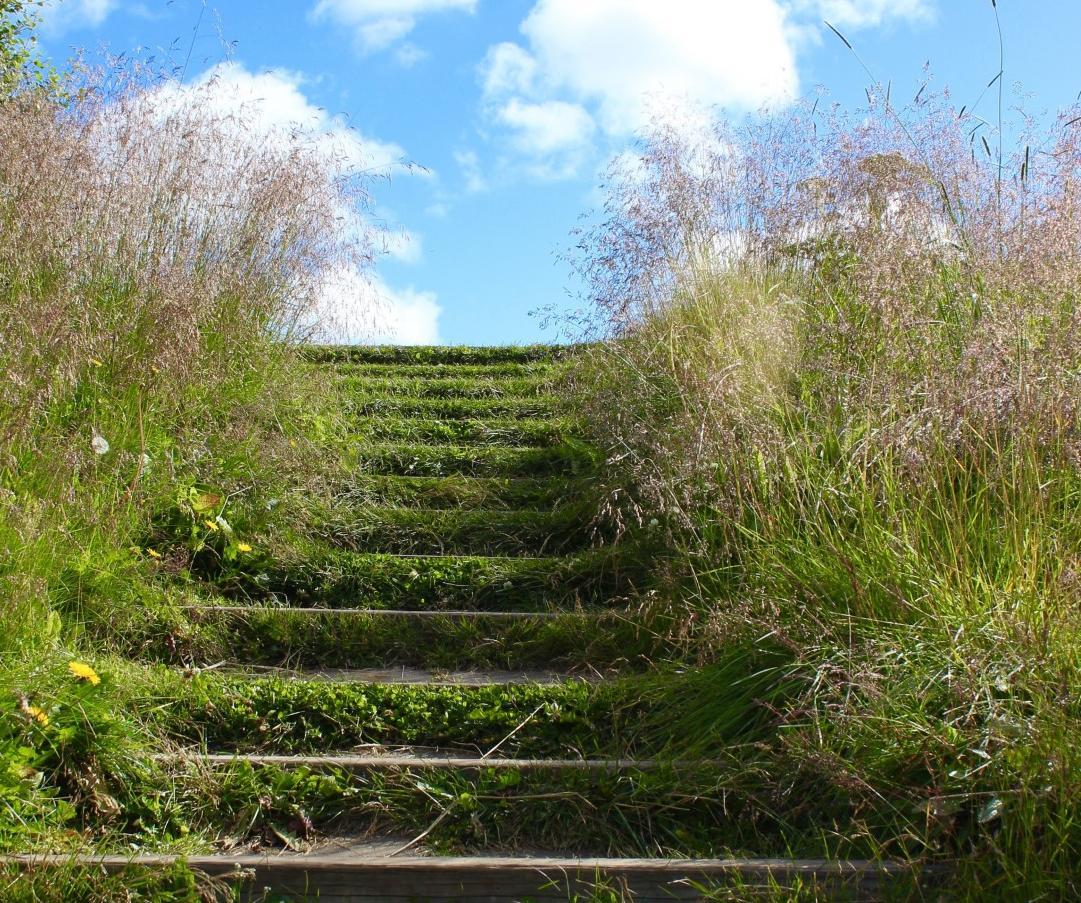escalier herbe
