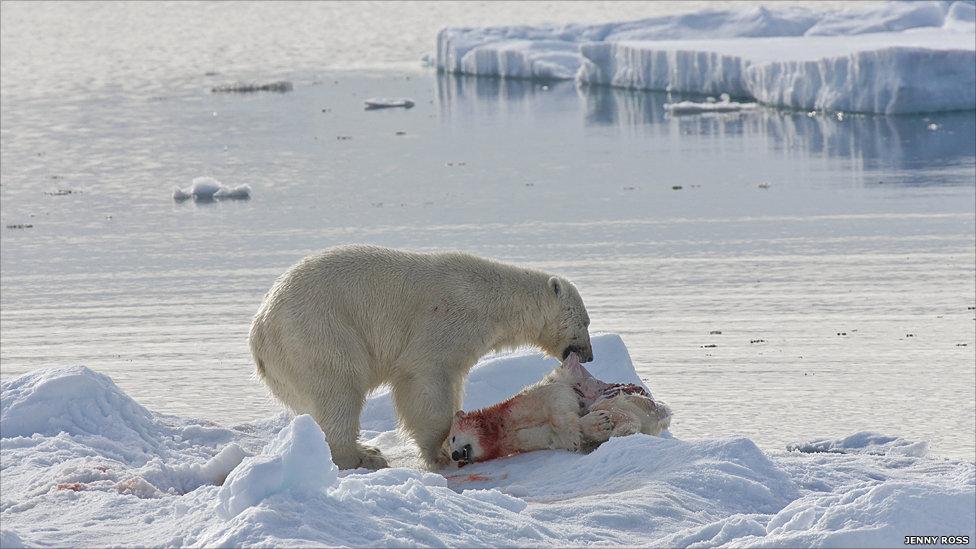 oso polar 5
