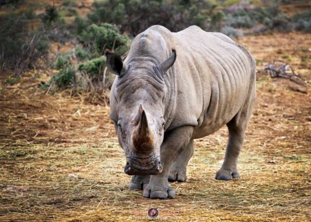 ext_rinocerontenegro