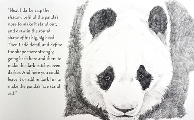 dibujar-panda09