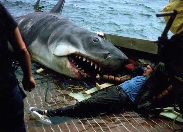 terror_tiburon